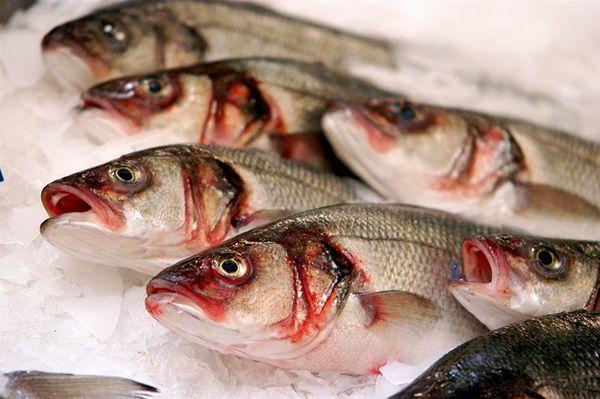 Основной источник заражения - речная рыба