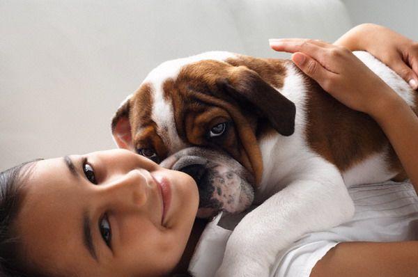 Токсокарозом можно заразиться от собаки