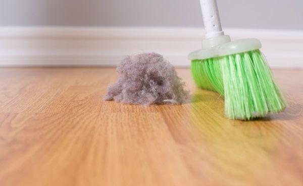 Домашняя пыль - среда обитания паразитов