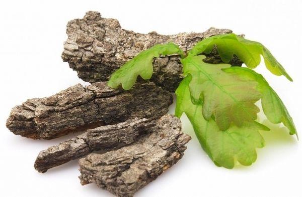 Кора дуба, как лечебное средство