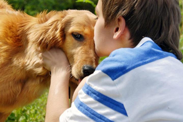 Собака, как источник заражения