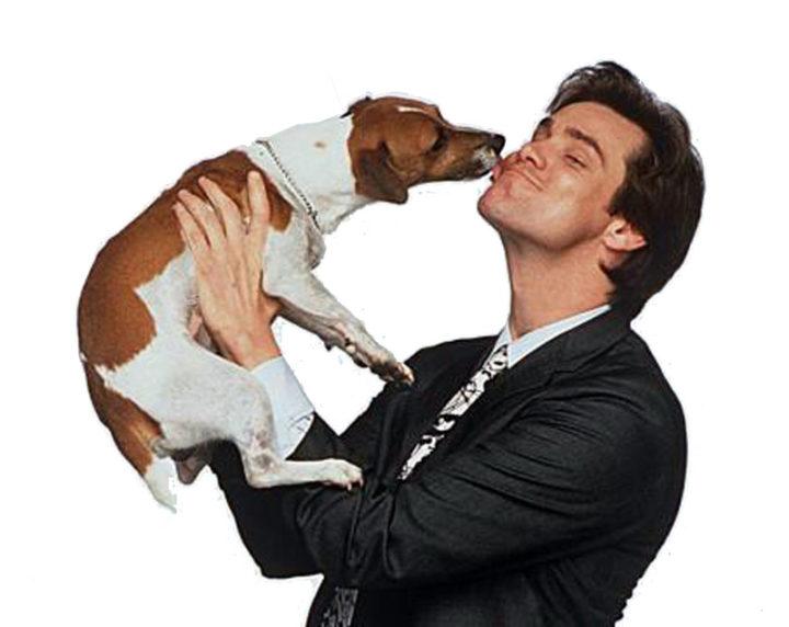 Разносчик - любимый пес