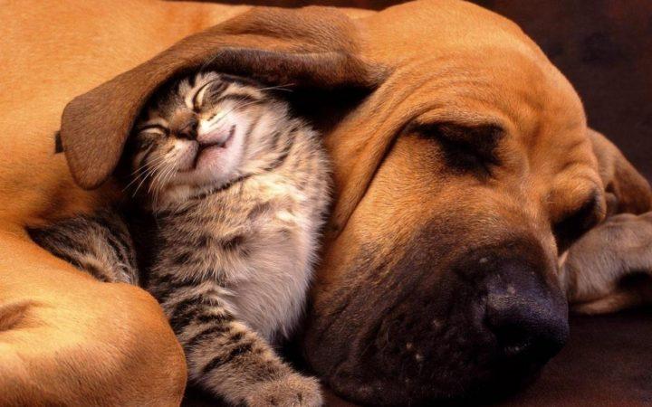 Инфицироваться возможно через животных