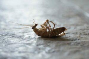 Гель от тараканов Домовой и как его правильно использовать